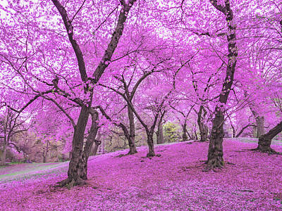 Cherry Blossoms Photograph - New York City Springtime by Vivienne Gucwa