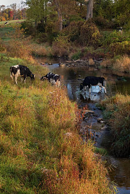 Photograph - New York Country Life by Bill Wakeley