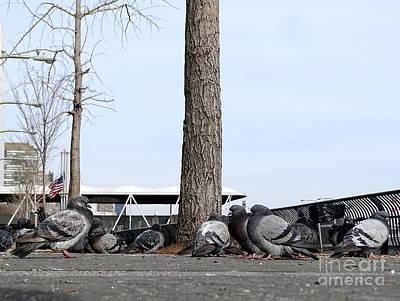 Photograph - New York City Pigeons #1 by Ed Weidman