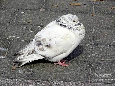Photograph - New York Pigeons #6 by Ed Weidman