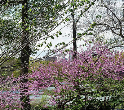 Photograph - New York Spring by Helen Haw