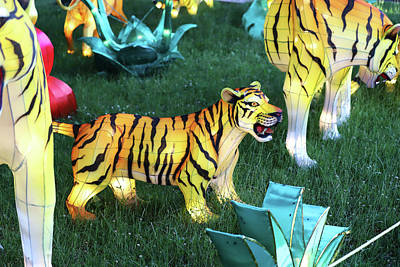 Photograph - New York State Chinese Lantern Festival 22 by David Stasiak