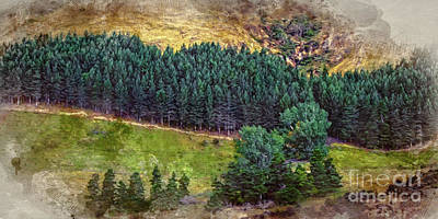Photograph - New Zealand Forest by Doug Sturgess
