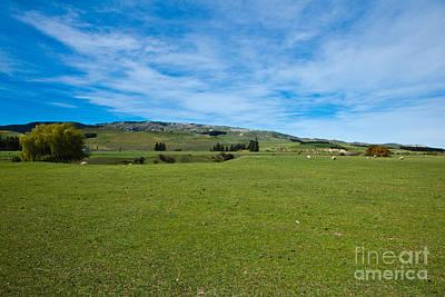 New Zealand Green Rolling Hills Art Print by John Buxton