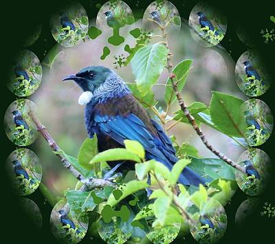 Digital Art - New Zealand Tui Reflections by Nancy Pauling