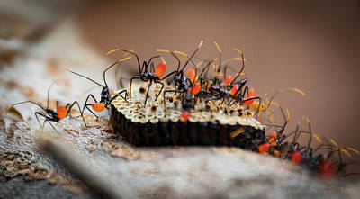 Photograph - Newborn Insects by Henri Irizarri