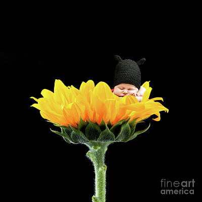 Photograph - Newborn On Flower by Gualtiero Boffi