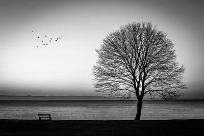 Photograph - Newcastle Tree by Dana Plourde