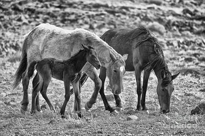 Photograph - Newest Mustang Family Bw by Vinnie Oakes