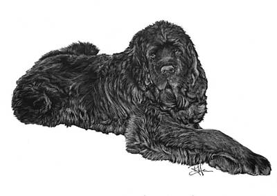 Drawing - Newfoundland 2 by Rachel Hames