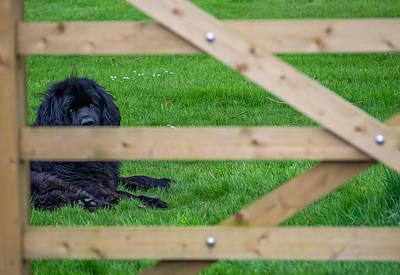 Newfoundland Dog Photograph - Newfoundland by Angela Aird