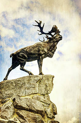 Photograph - Newfoundland Caribou At Beaumont-hamel - Vintage Version by Weston Westmoreland