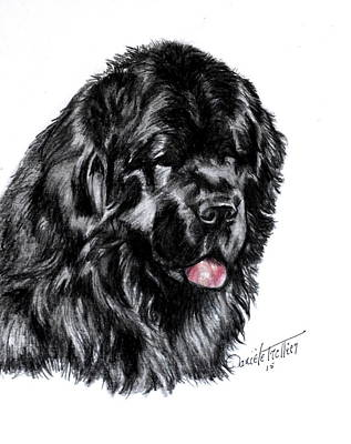 Newfoundland Original by Daniele Trottier