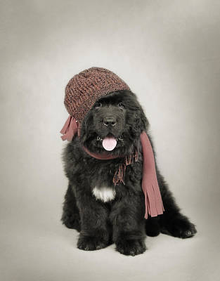 Newfoundland Puppy Photograph - Newfoundland Dog Puppy by Waldek Dabrowski