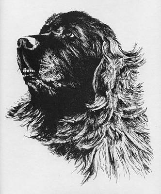 Headstudy Drawing - Newfoundland Headstudy by Patrice Clarkson