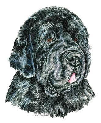 Akc Drawing - Newfoundland by Kathleen Sepulveda