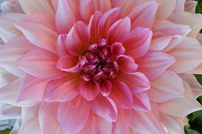 Photograph - Newport Flower #1 by Fred Bonilla