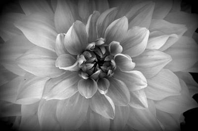 Photograph - Newport Monochrome Flower #1 by Fred Bonilla