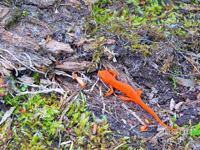 Newts Digital Art - Newt Crossing by Brian Otto