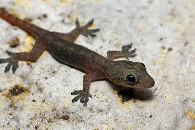 Photograph - Newt by Larah McElroy