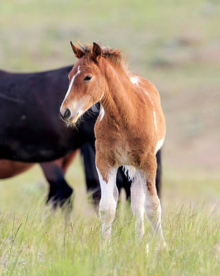 Photograph - Next Generation Of The Mustang by Jack Bell