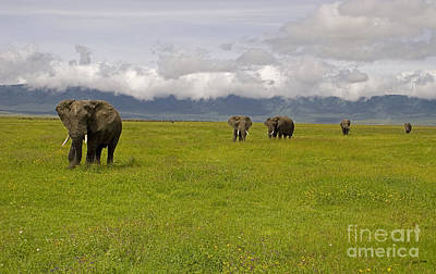 Ngorongoro Elephants-signed-#0135 Original