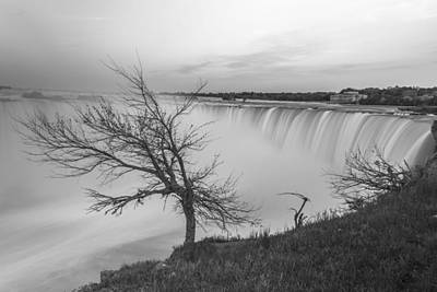 Photograph - Niagara Tree In Black And White  by John McGraw