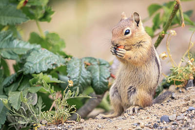 Photograph - Nibble Break by Windy Corduroy