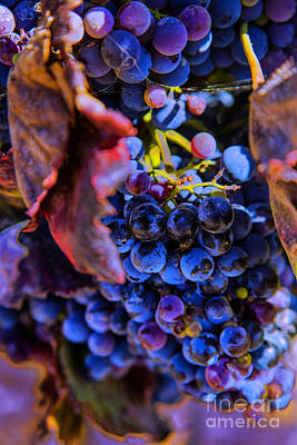 Photograph - Nice Cabernet by Rick Bragan