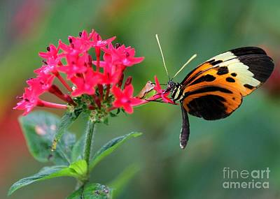 Etherial Photograph - Nice Numata Butterfly by Sabrina L Ryan