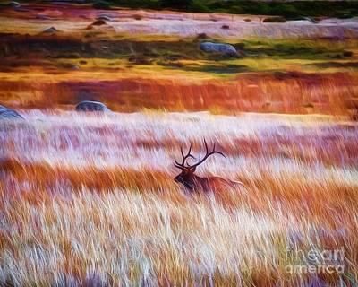 Photograph - Nice Rack by Jon Burch Photography