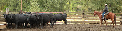 Photograph - Nick Shipping Cattle by Diane Bohna