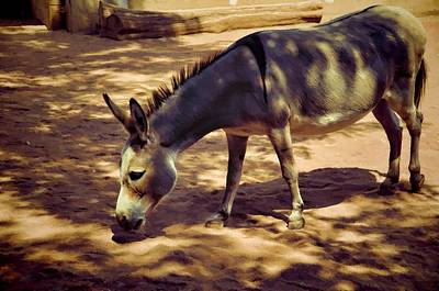 Photograph - Nigerian Donkey by Jan Amiss Photography
