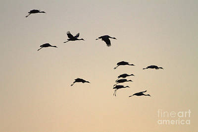 Photograph - Night Amongst  The Cranes  by Ruth Jolly