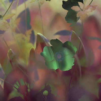 Photograph - Night Anemone by Jenny Rainbow