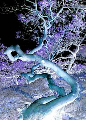 Photograph - Night Arbutus by Frank Townsley