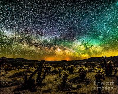 Photograph - Night At Cholla Cactus Garden by Willard Sharp