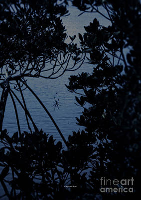 Photograph - Night Banana Spider by Megan Dirsa-DuBois