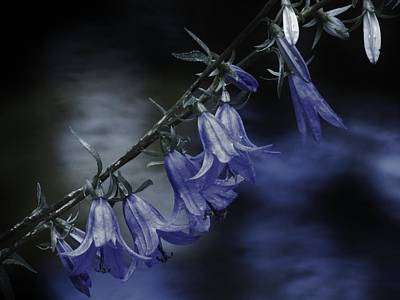 Photograph - Night Bells by Barbara St Jean