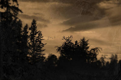 Photograph - Night Birds by Theresa Pausch