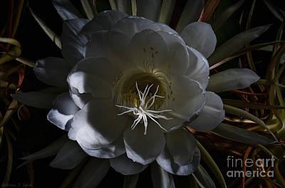 Night-blooming Cereus Deep 2 Art Print by Warren Sarle