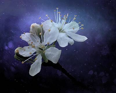 Photograph - Night Blooms  by I'ina Van Lawick