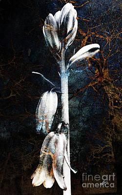 Stalk Mixed Media - Night Bluebells by Callan Percy