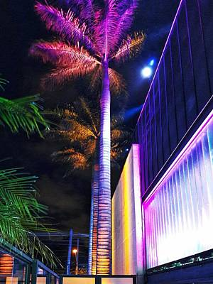 Photograph - Night Colors - Palm Tree And Modern Architecture by Carlos Alkmin