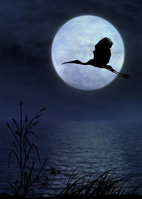 Art Print featuring the photograph Night Flight by Christina Lihani