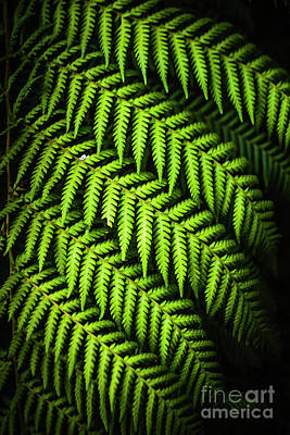 Photograph - Night Forest Frond by Jorgo Photography - Wall Art Gallery
