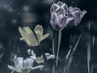 Night Garden Tulips  Art Print