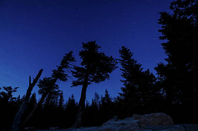 Photograph - Night Giants by Margaret Pitcher