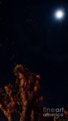 Photograph - Night Glow by Angela J Wright
