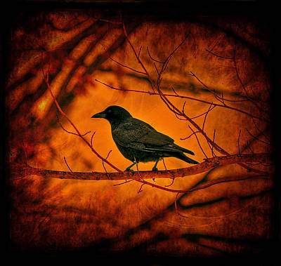 Birds Rights Managed Images - Night Guard Royalty-Free Image by Evelina Kremsdorf